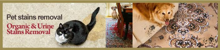 stain pet carpet cleaning